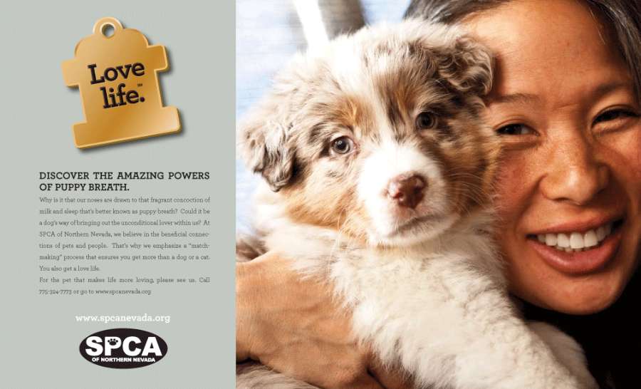 Print Ad for SPCA by Stan Can Design